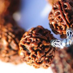 The Astrological Significance of Rudraksha and Mukhi